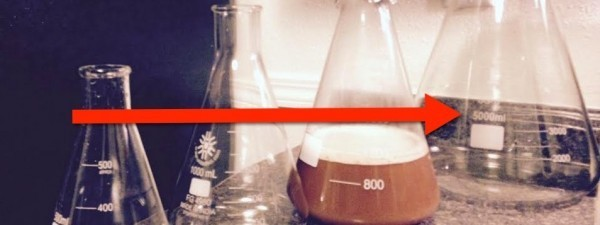 Do You Really Need A 5000 ml Erlenmeyer Flask?