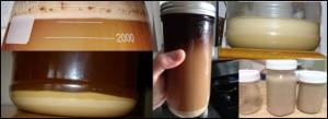 reused yeast in mason jars and erlenmeyer flasks